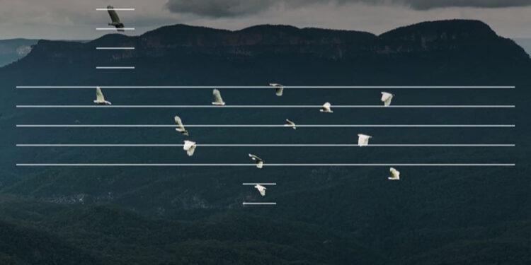 Музыкант заметил сходство летящих птиц с нотами и превратил их в мелодию